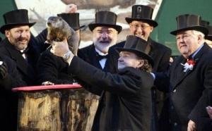 Punxsutawney Phil emerges