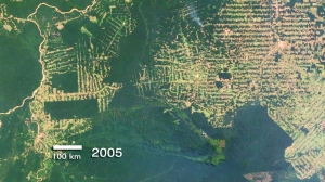 Deforestation of the Brazilian rain forest as seen from space.