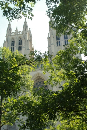 Cathedral through trees