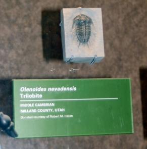 Millard County trilobite